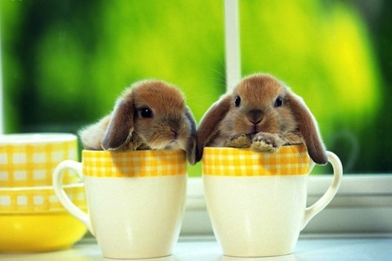CupOfGood - Bunnies in Cups