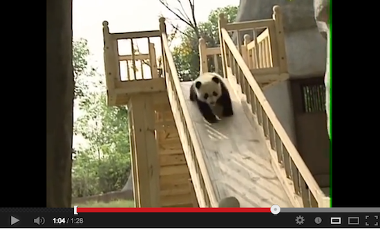 CupOfGood  - Pandas on a Slide