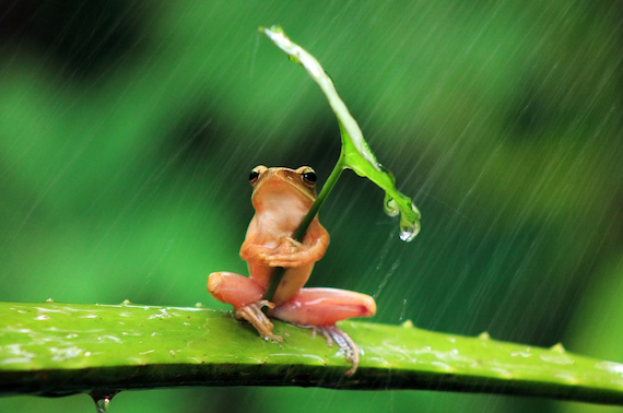 CupOfGood - Frog with Umbrella