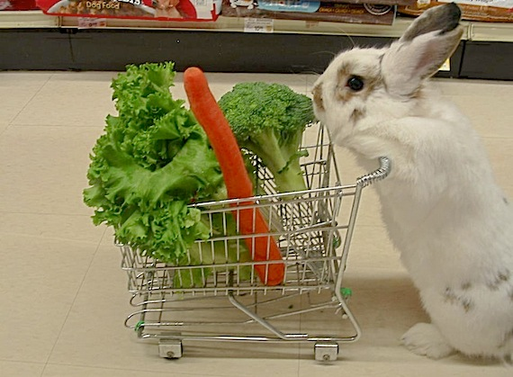 CupOfGood - Bunny Goes Shopping